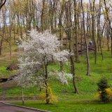 Парк Высокий замок, Львов