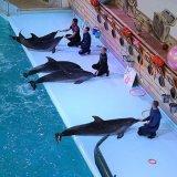 Дельфінарій «Оскар» в Трускавці