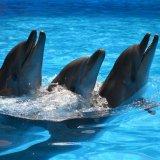 "Dolphinarium ""Oscar"" in Truskavets"