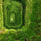 Tunnel of love summer