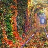 Tunnel of love autumn