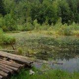 Озеро Мертвое (Журавлиное), Каменка