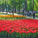 Kirovograd Dendropark