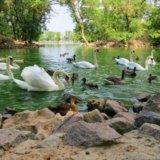 Заповідник Асканія-Нова,озеро