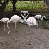 Заповедник Аскания-Нова,фламинго