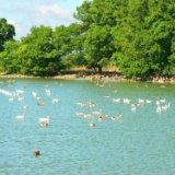 Preserve of Askania Nova, lake
