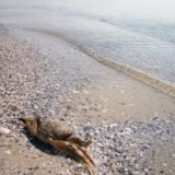 Кінбурнська коса.пляж