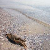 Кинбурнская коса,пляж
