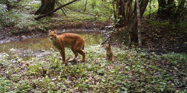 Чернобыльская зона ,животные