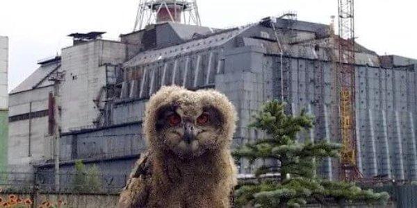 Чернобыльская зона,саркофаг