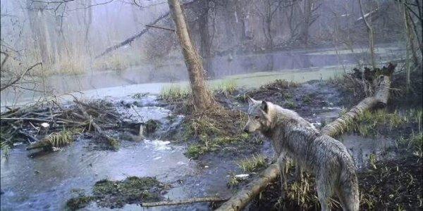 Pripyat. Chernobyl Exclusion Zone