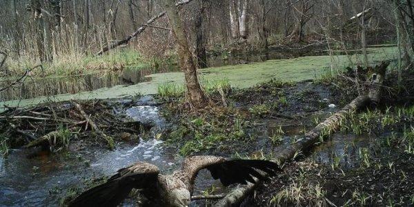 Чернобыльская зона ,природа