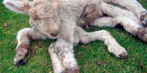 mutated_chernobyl_animals