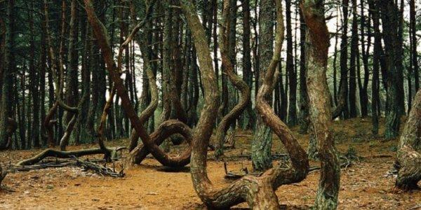 Чернобыльская зона. Рыжий лес