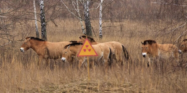 animals in the Exclusion Zone