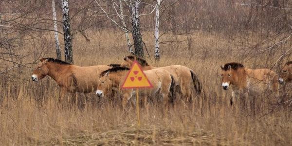 Зоне отчуждения,кони