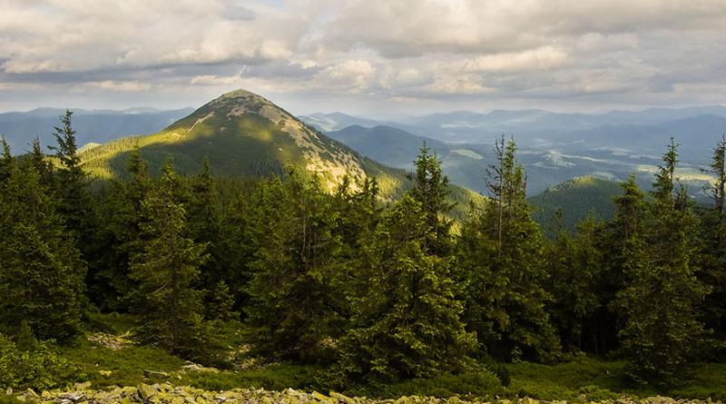 Гора Хомяк ( Карпаты) | Путешествия по Украине