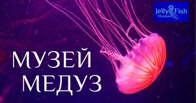Museum of jellyfish. Kiev