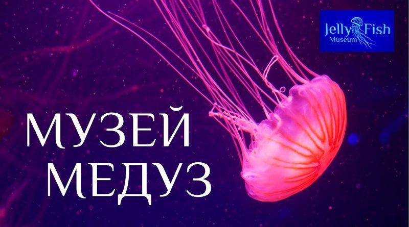 Музей медуз. Київ